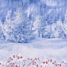 Простынь бязь 199091 Зима 1.5 сп фото